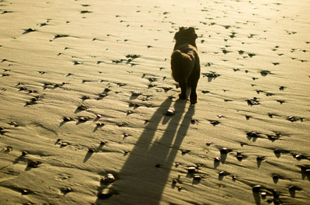 wally-walking-on-beach-in-shadow-450-wb