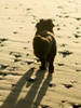 wally walking on beach in shadow 75x100
